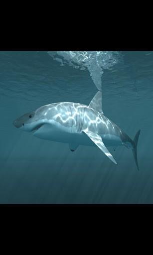 live shark wallpaper - photo #38