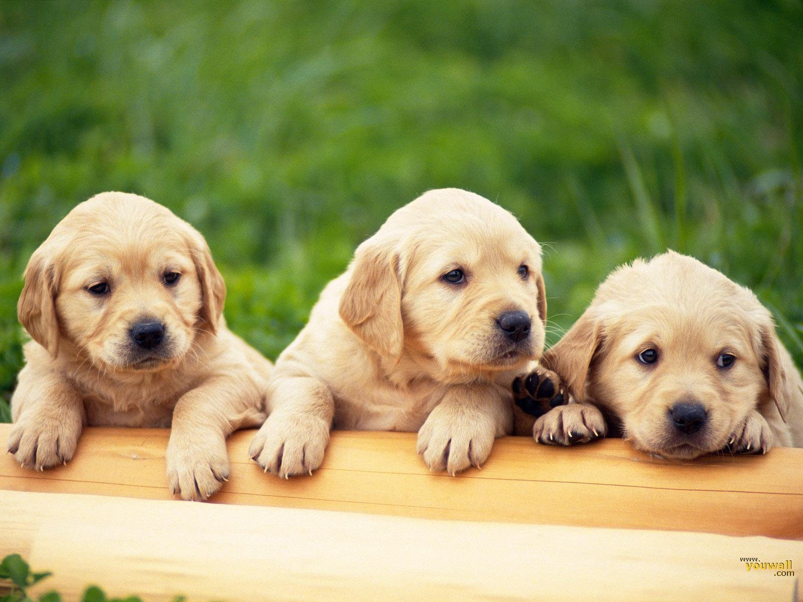 YouWall   Cute Dogs Wallpaper   wallpaperwallpapersfree wallpaper 1600x1200