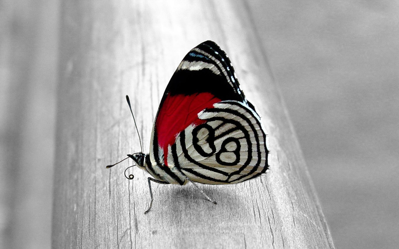 Unique Butterfly desktop wallpaper 1680x1050