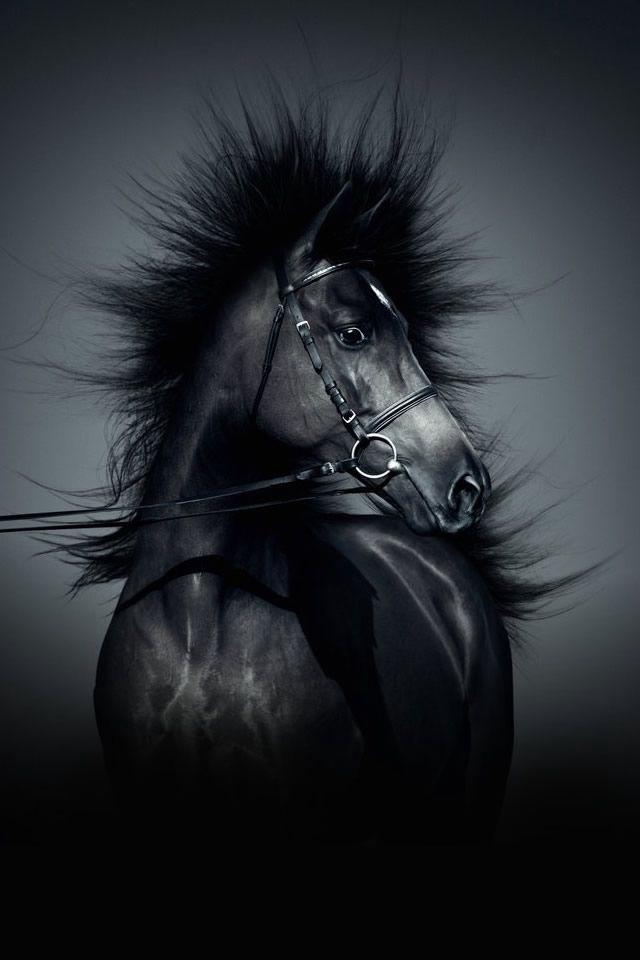 Horse Wallpaper For IPhone WallpaperSafari