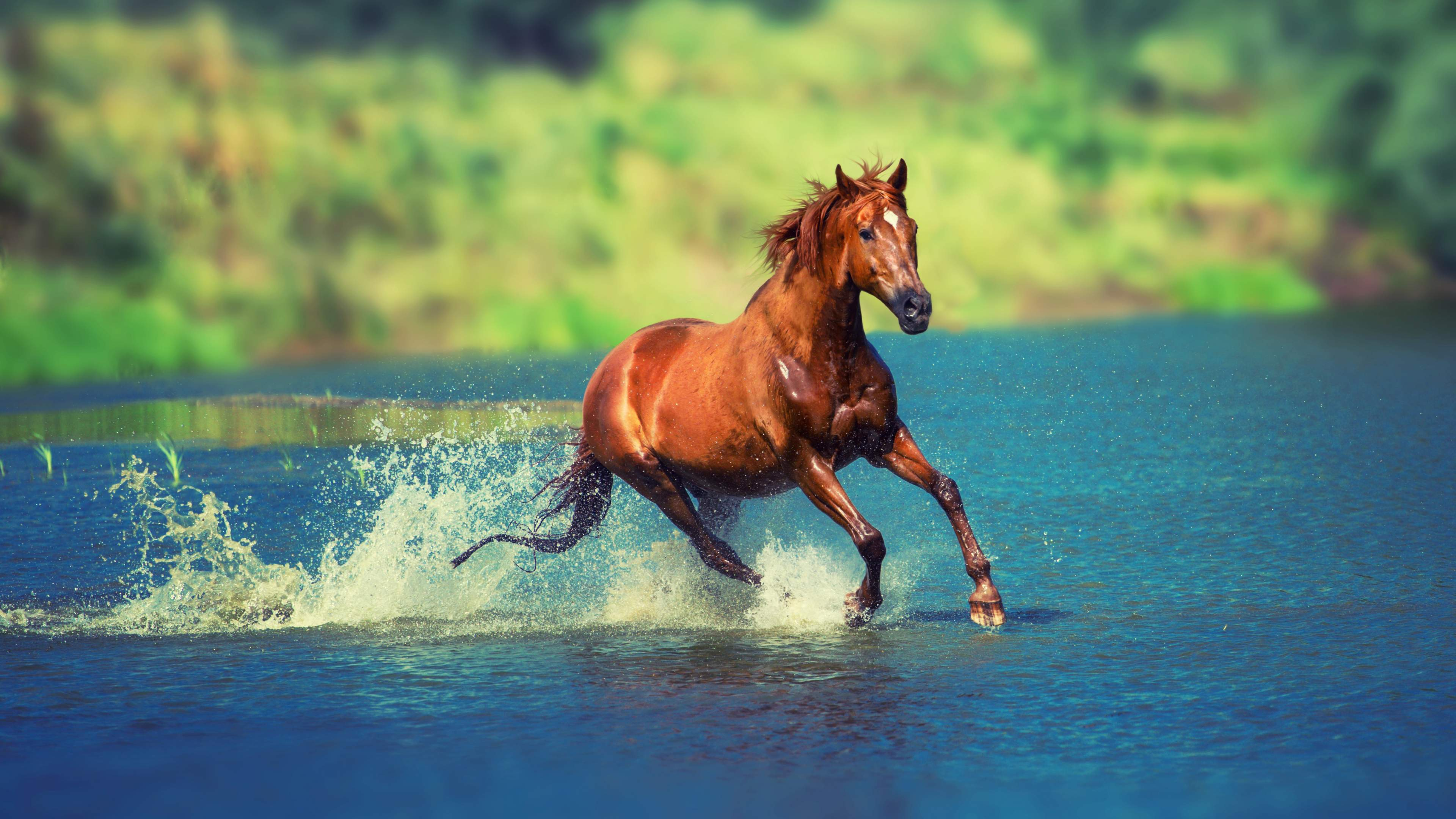 Wild Horse Running 4K Wallpaper For Desktop 3840x2160 3840x2160