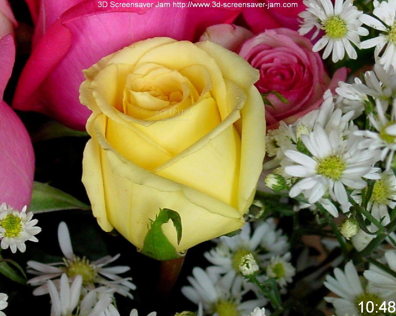 50 free roses wallpaper screensavers on wallpapersafari - Rose screensaver ...