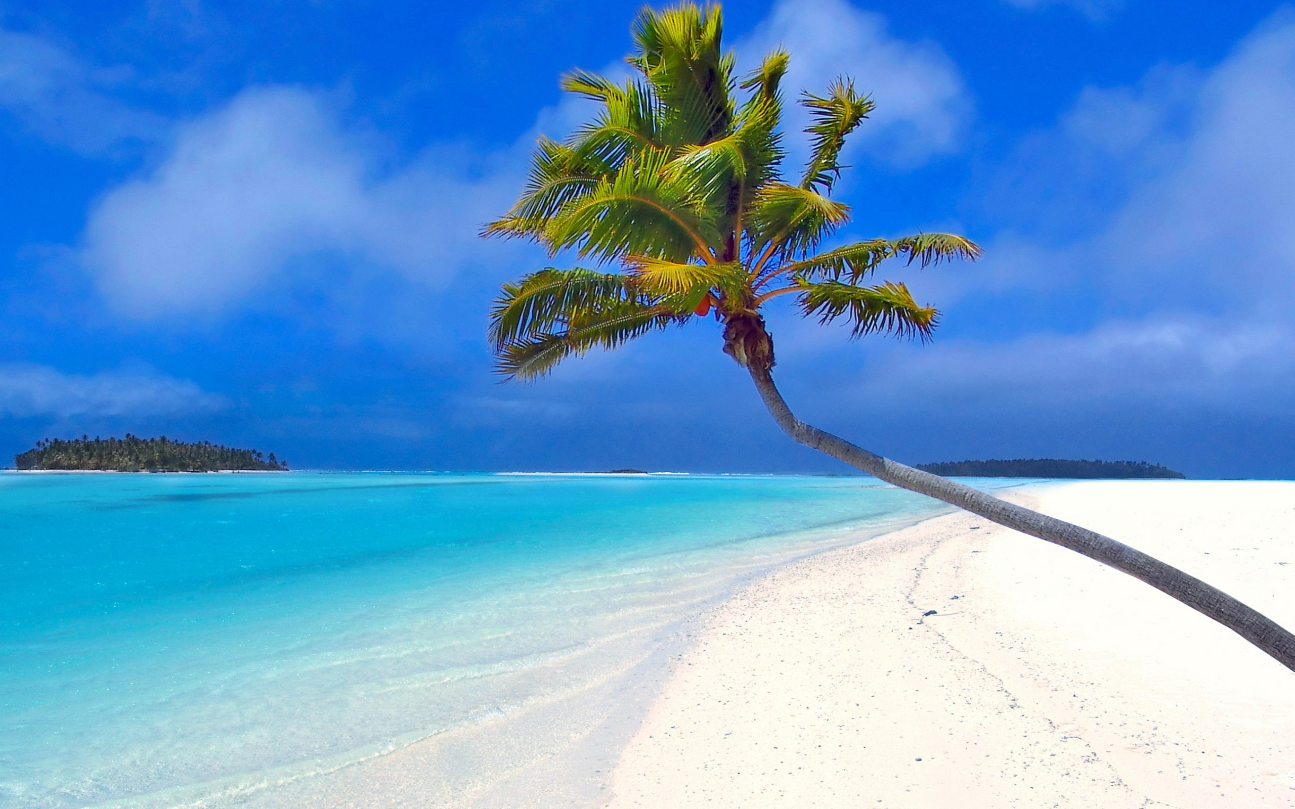 2560x1600 Isolated palm tree desktop PC and Mac wallpaper 2560x1600