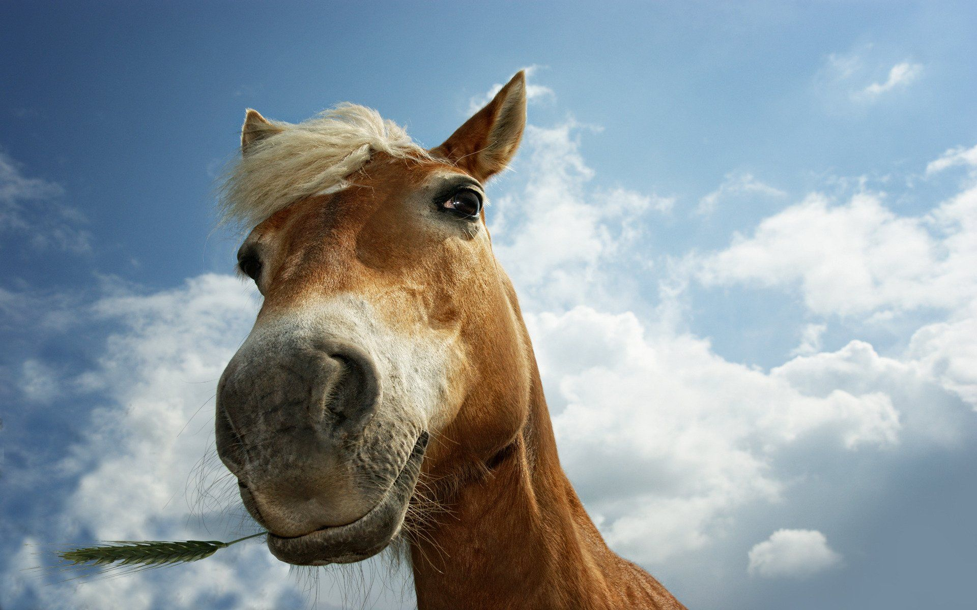 Funny Horse Funny Horse Closeup Wallpapers Pictures Photos 1920x1200