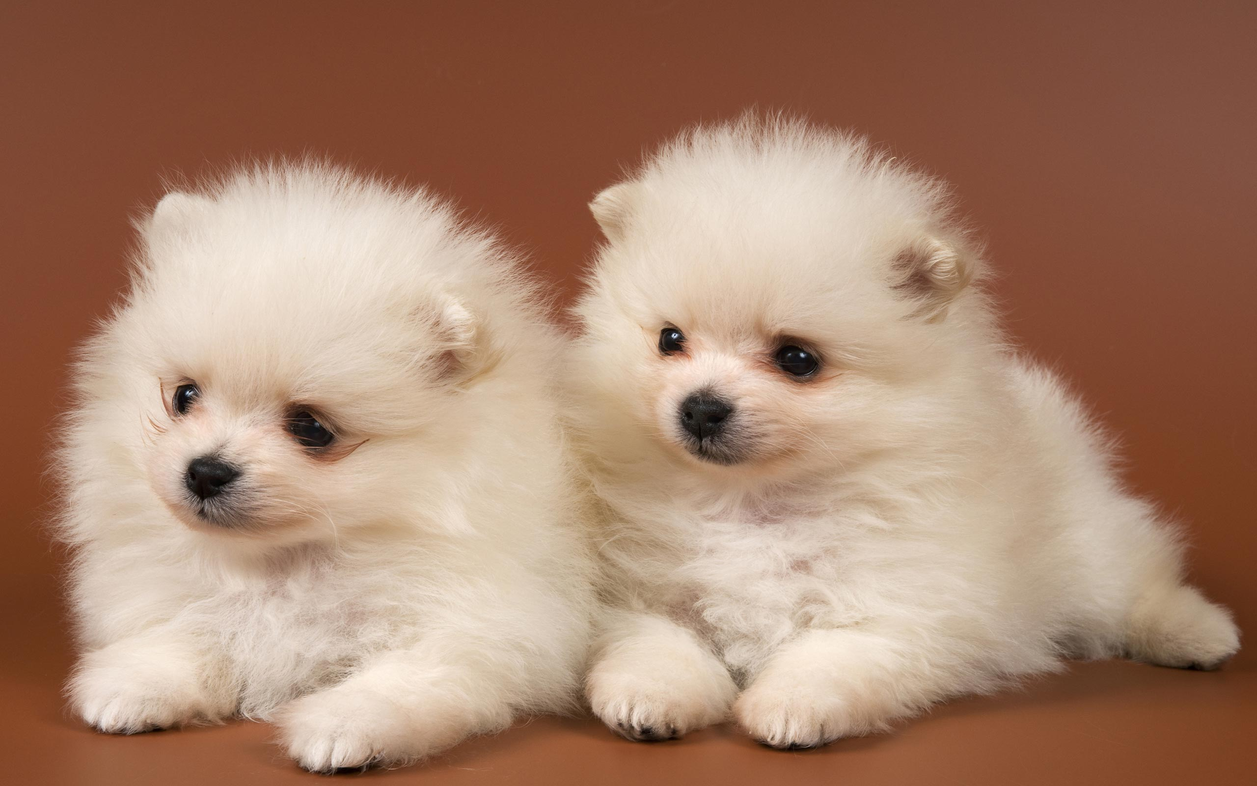 Puppies HD Wallpapers Hd Wallpapers 2560x1600