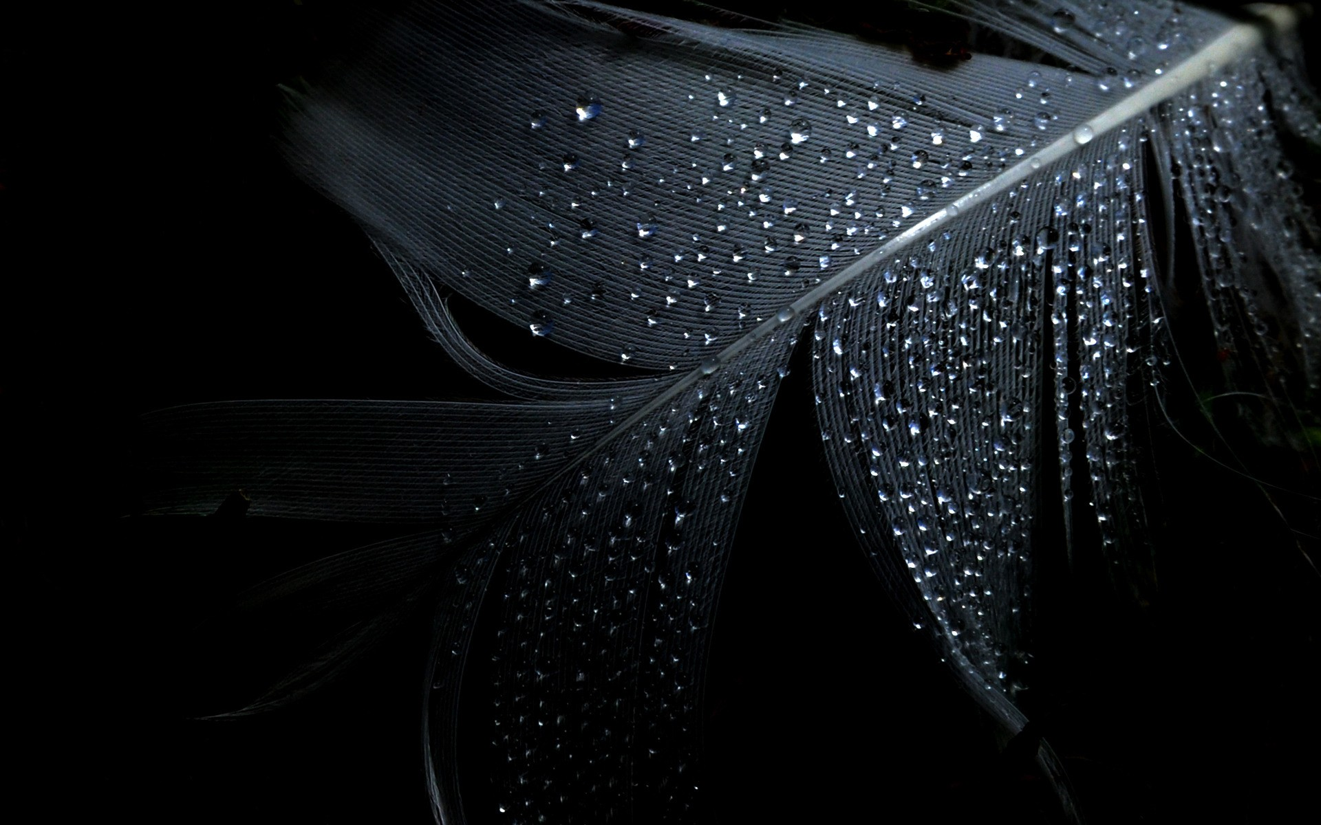 Black Dark Wallpaper 1920x1200 Black Dark Feathers 1920x1200