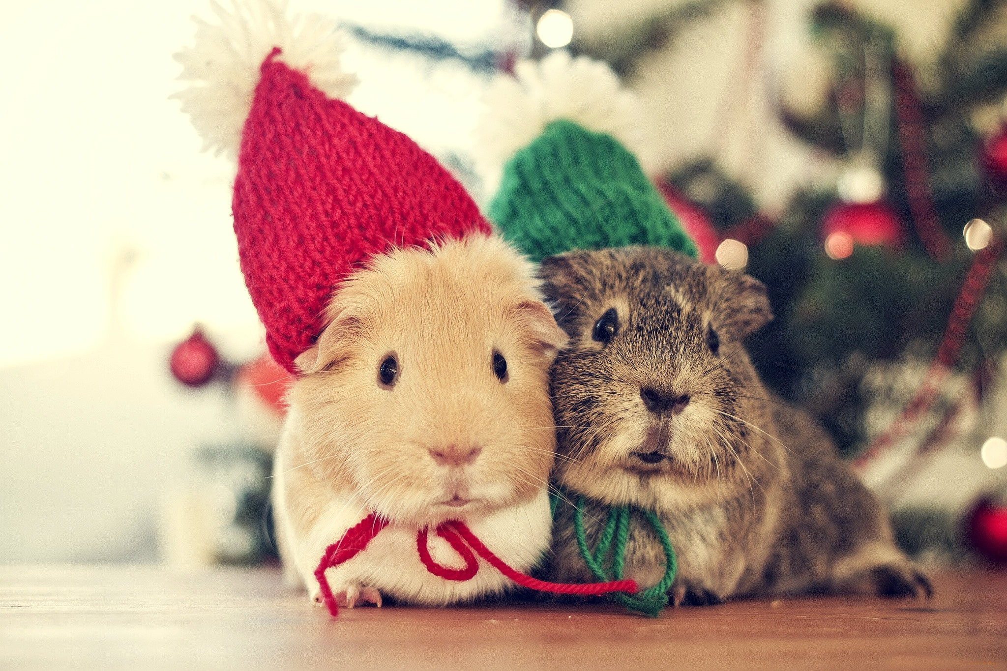 Christmas Animals Cute Winter Cold Cozy Couple Holiday Mouse wallpaper 2048x1365