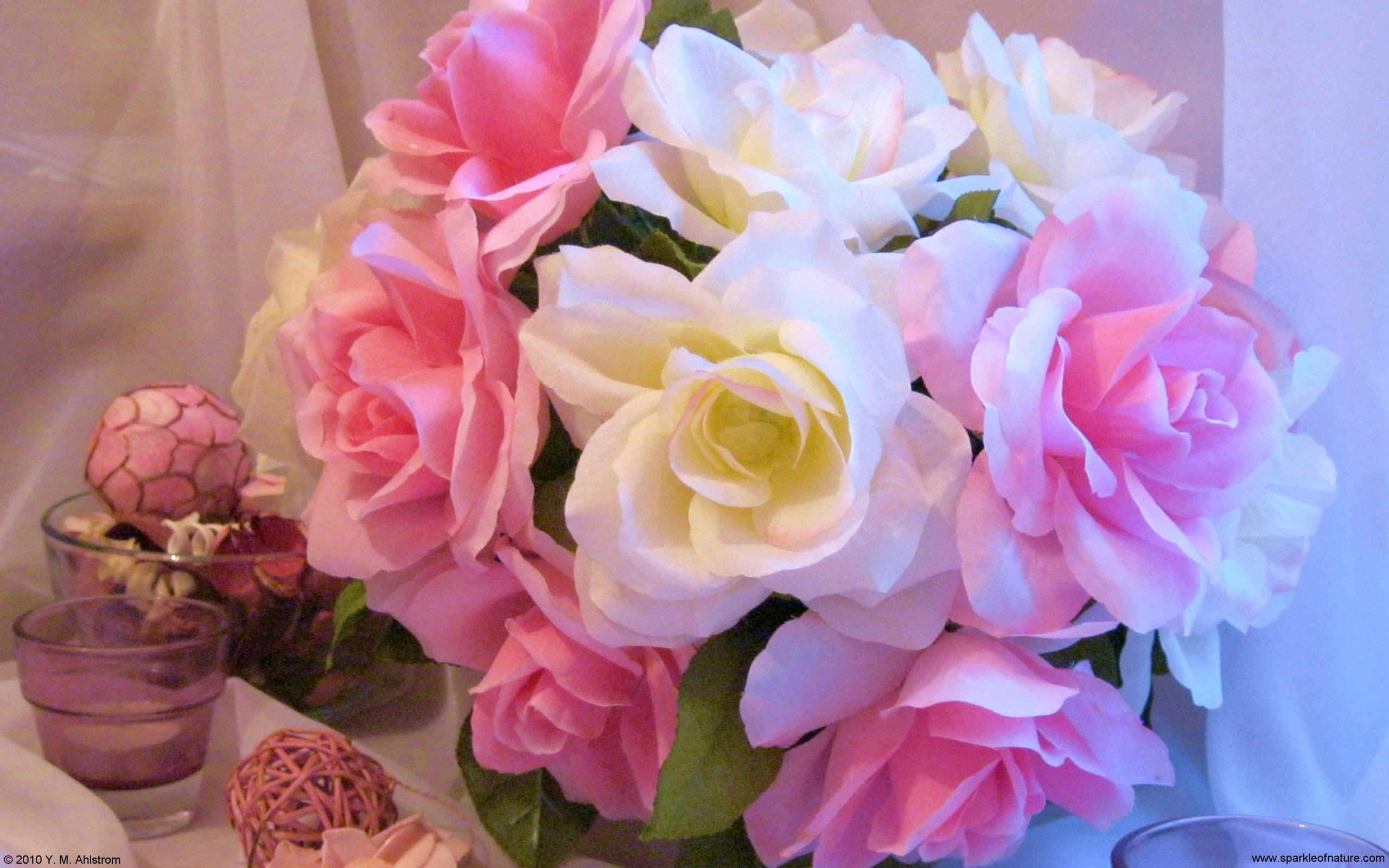 0357 pink and white roses W 2560x1600jpg 411499 bytes 2560x1600