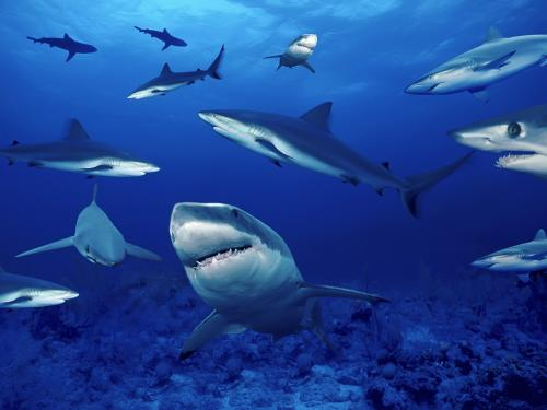 sea animals wallpapers download desktop wallpaper   43 500x375