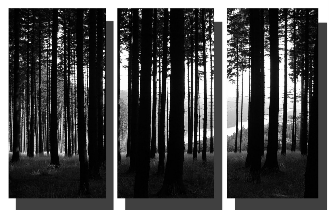 Black And White Pictures Anime Forest 29 Hd Wallpaper 1280x817