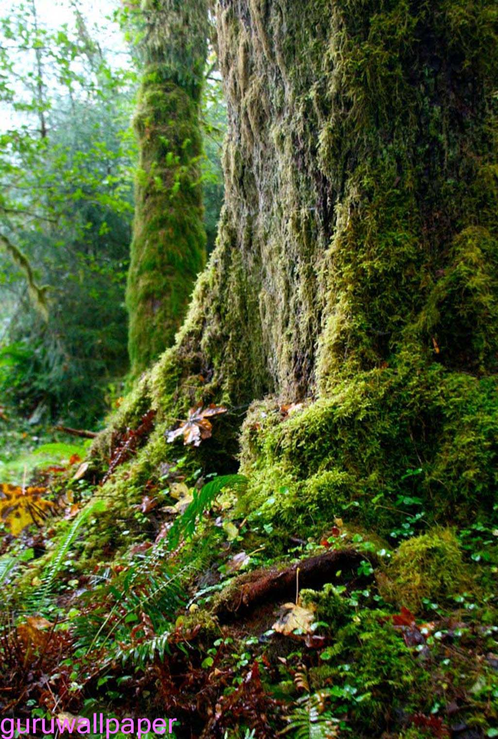 Rainy forest wallpaper wallpapersafari - Rainy nature hd wallpaper ...