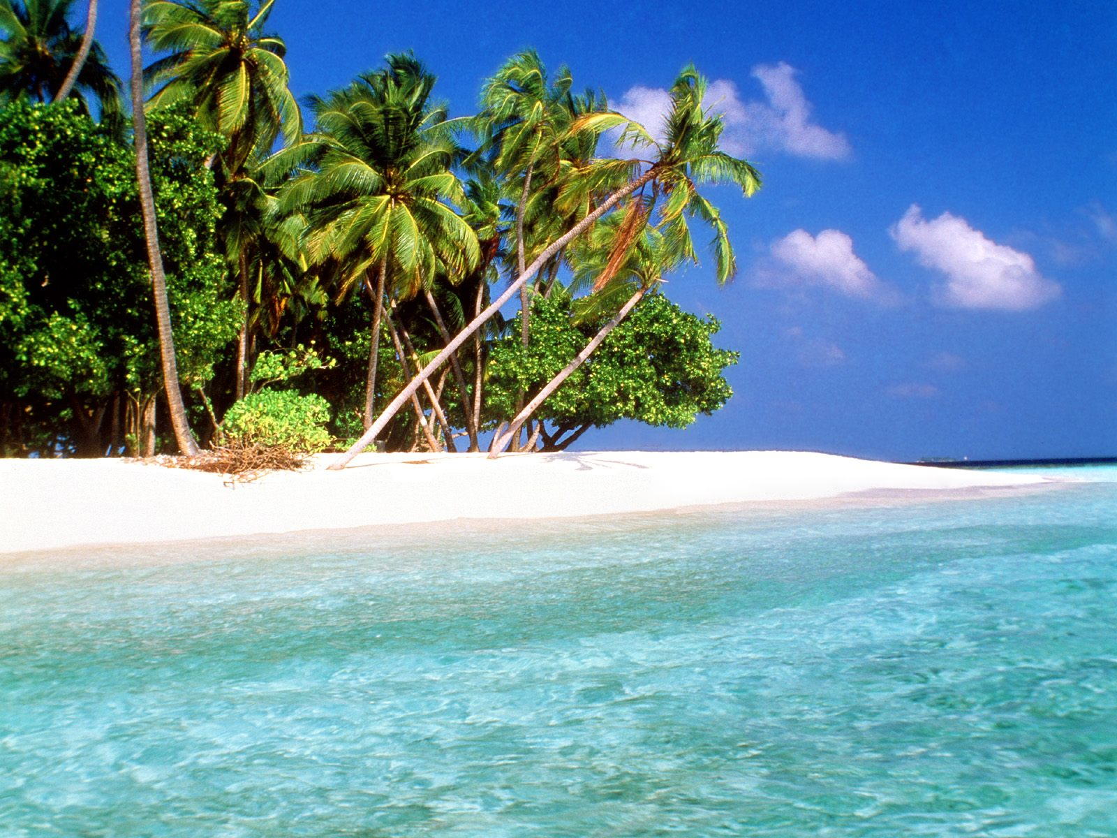 Fantastic beach wallpaper with palm tress and wonderful fresh water 1600x1200
