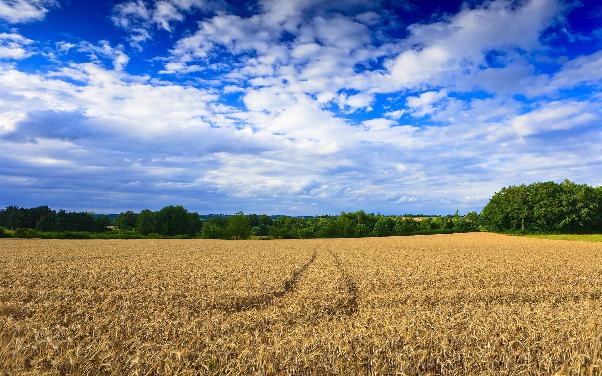 Hermoso campo de trigo y cielo fondos de pantalla 1920x1200