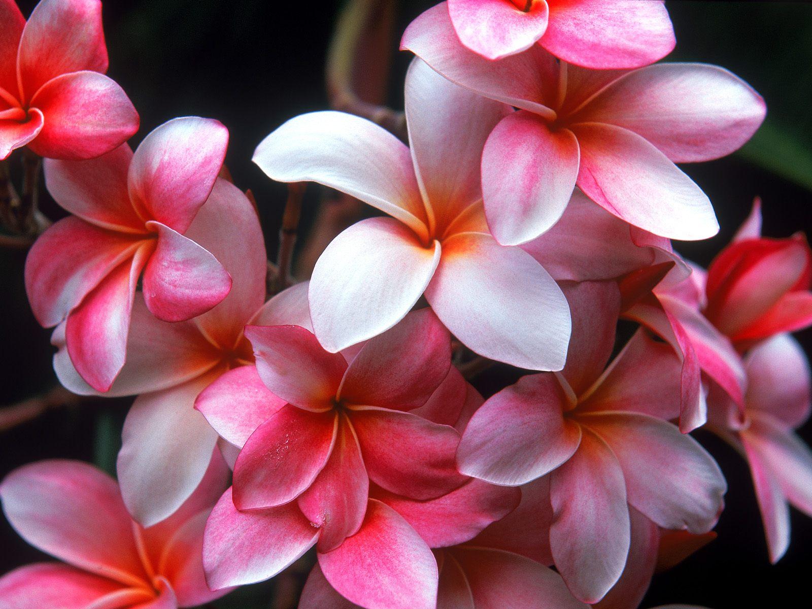 Pink Hawaiian Flowers Savingourboysfo