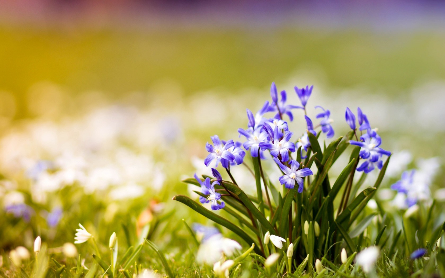 Spring Pic   Wallpaper High Definition High Quality Widescreen 1680x1050