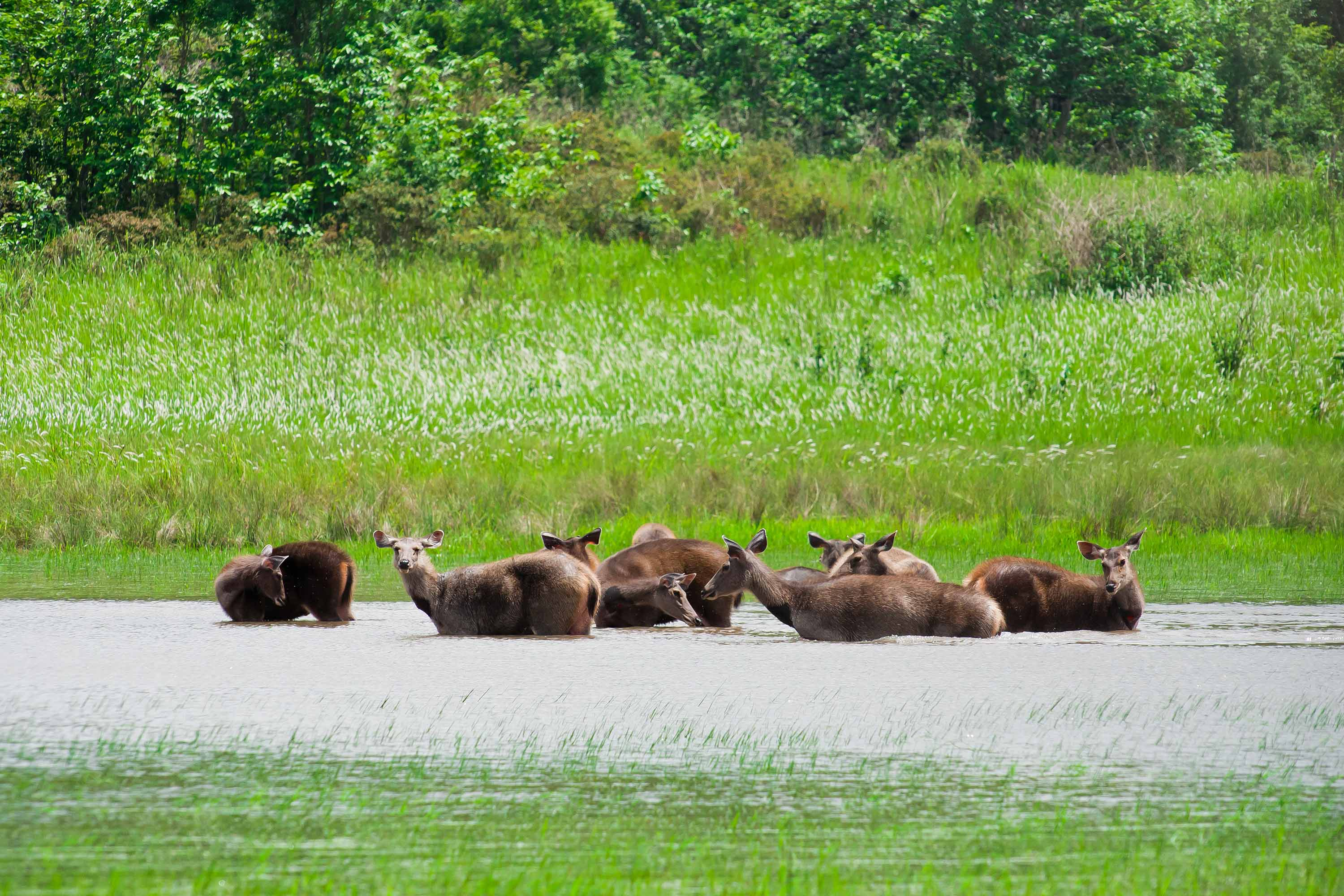 sundarbantours images wild life beauty of sundarban national park 3000x2000
