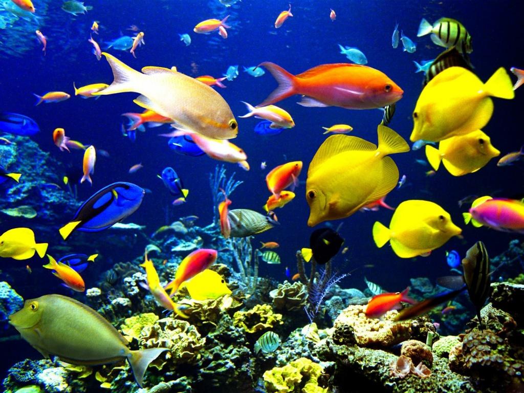 Various colorful fish underwater deep sea 1024x768