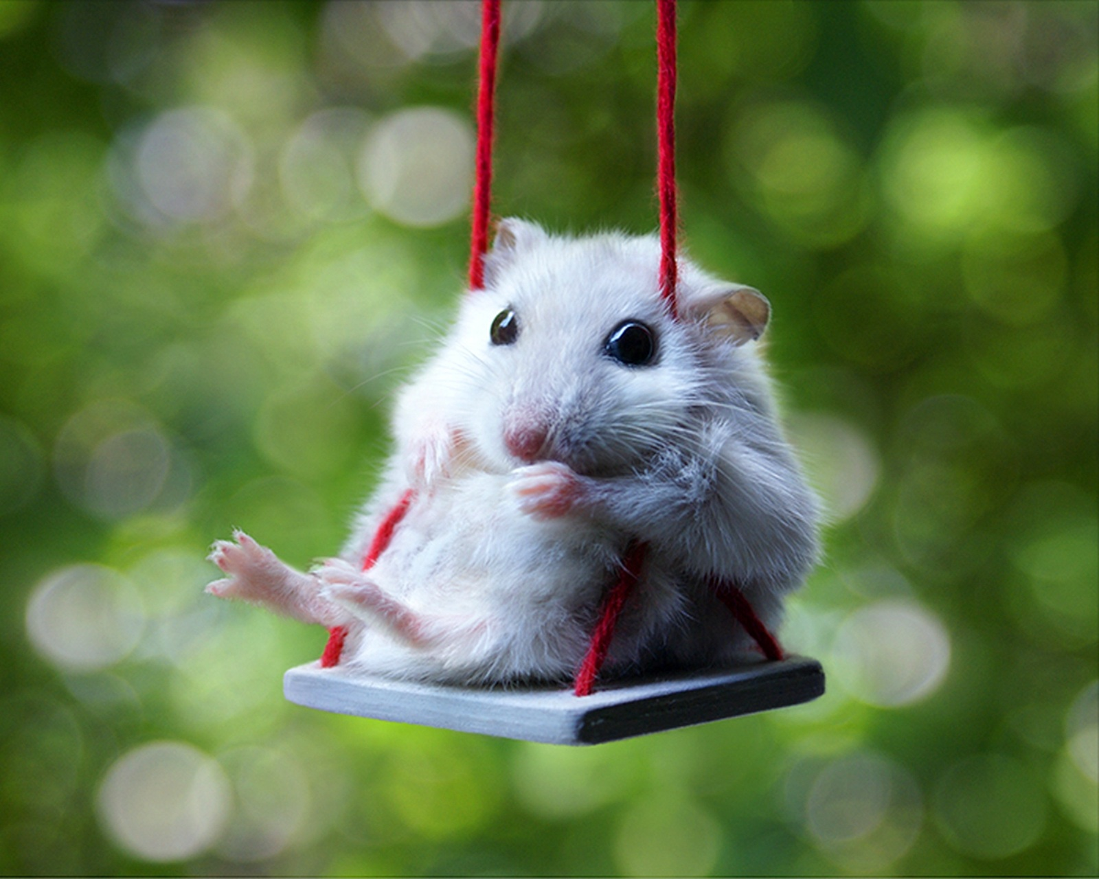 Cute Hamsters Wallpapers cute white hamster wallpaper computer 1600x1280