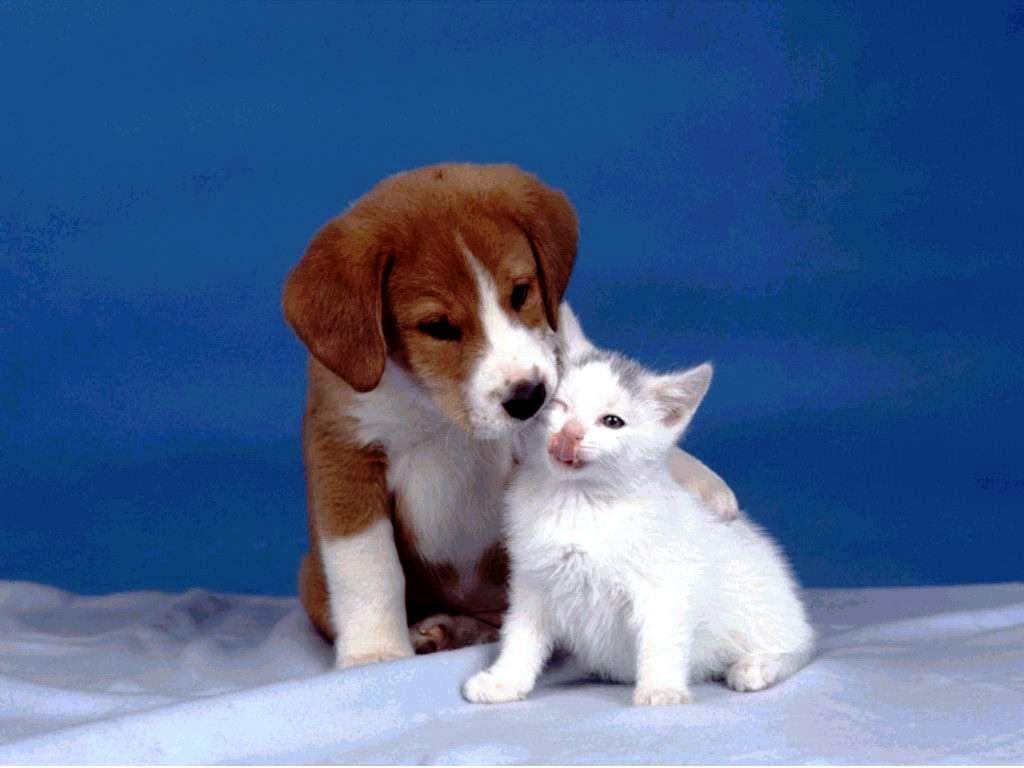 Dog Screensaver And Wallpaper Dog And Cat photos Dog Screensaver 1024x768