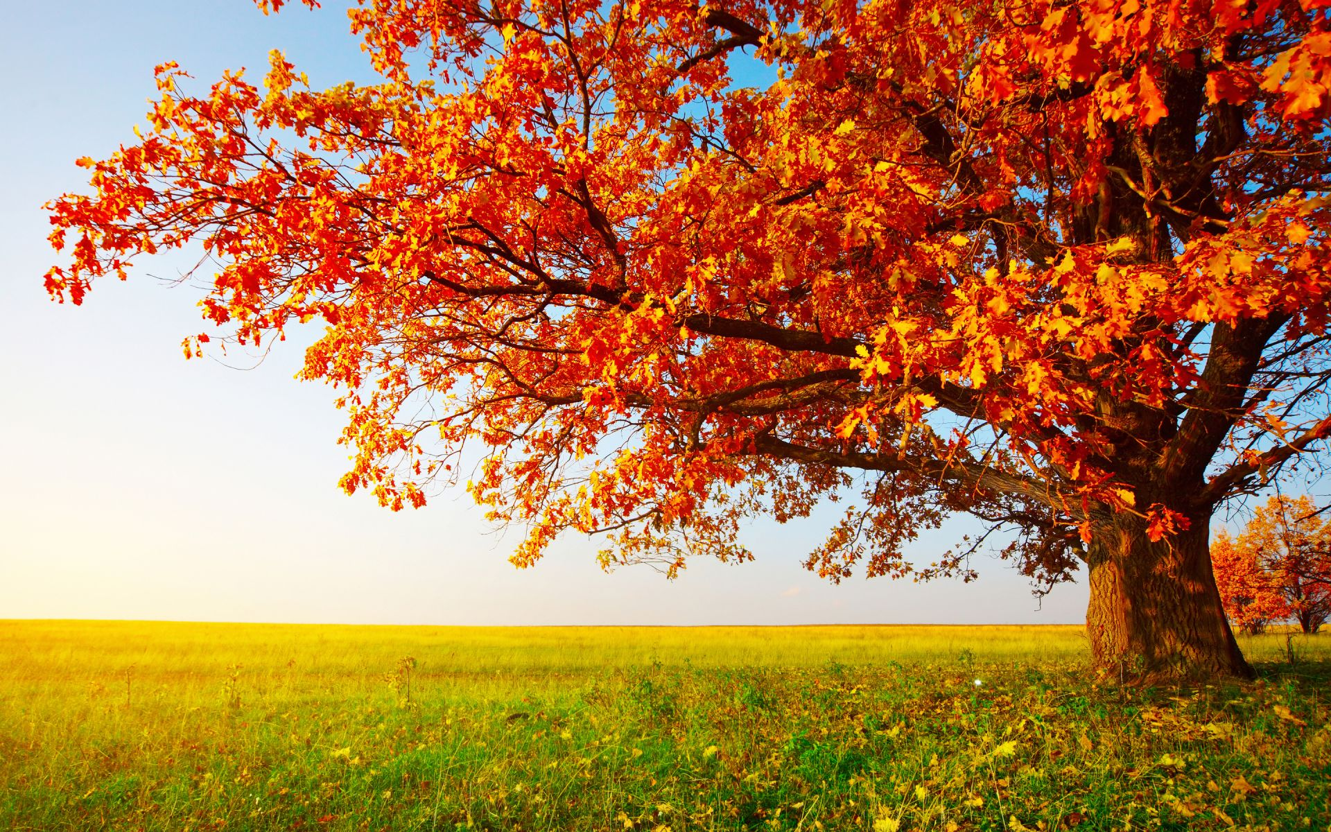 fall wallpaper widescreen monitor - photo #23