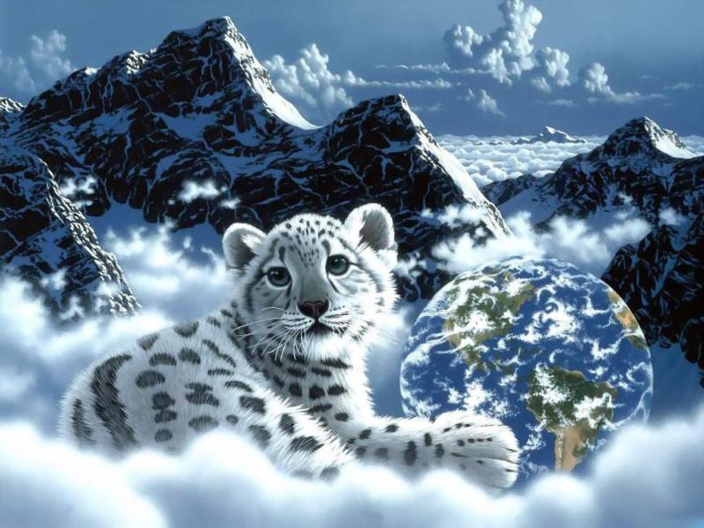 Beautiful Animal Wallpaper HDComputer Wallpaper 1024x768