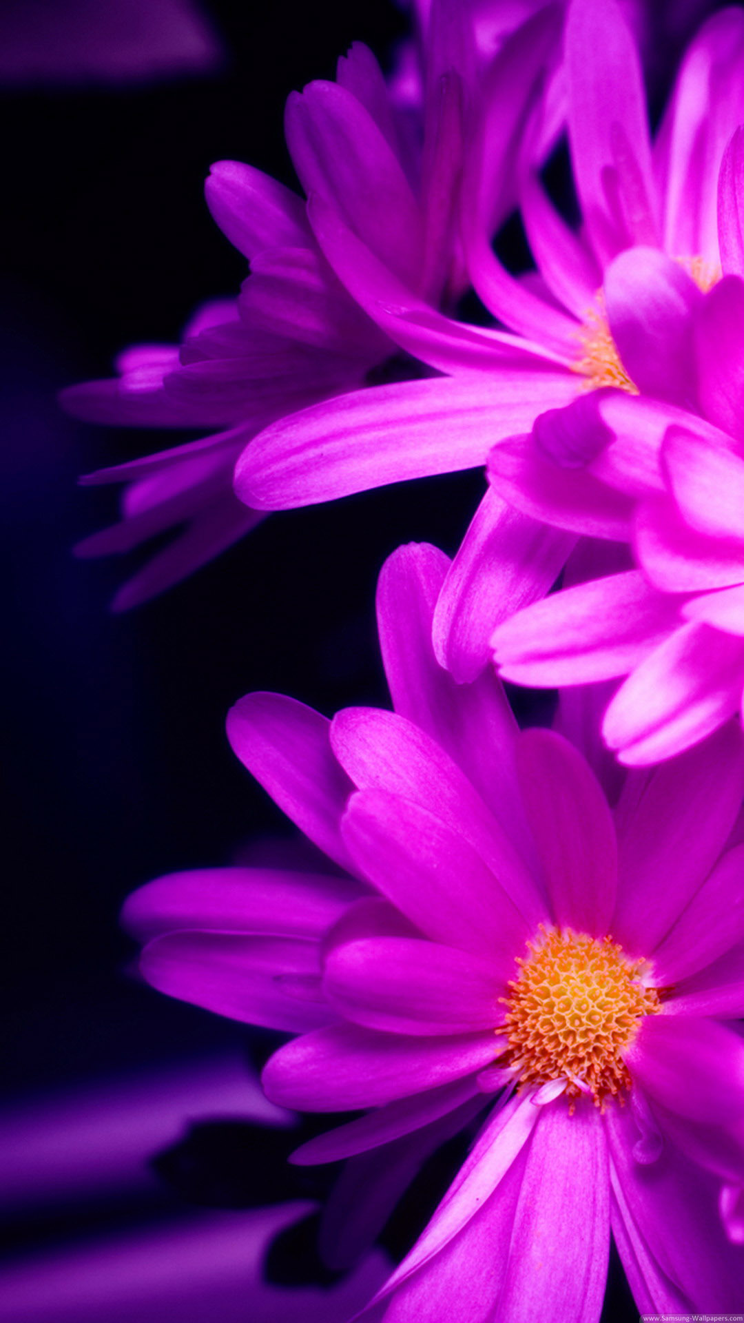 Pink Daisy Wallpaper iPhone 6 Plus preview 1080x1920
