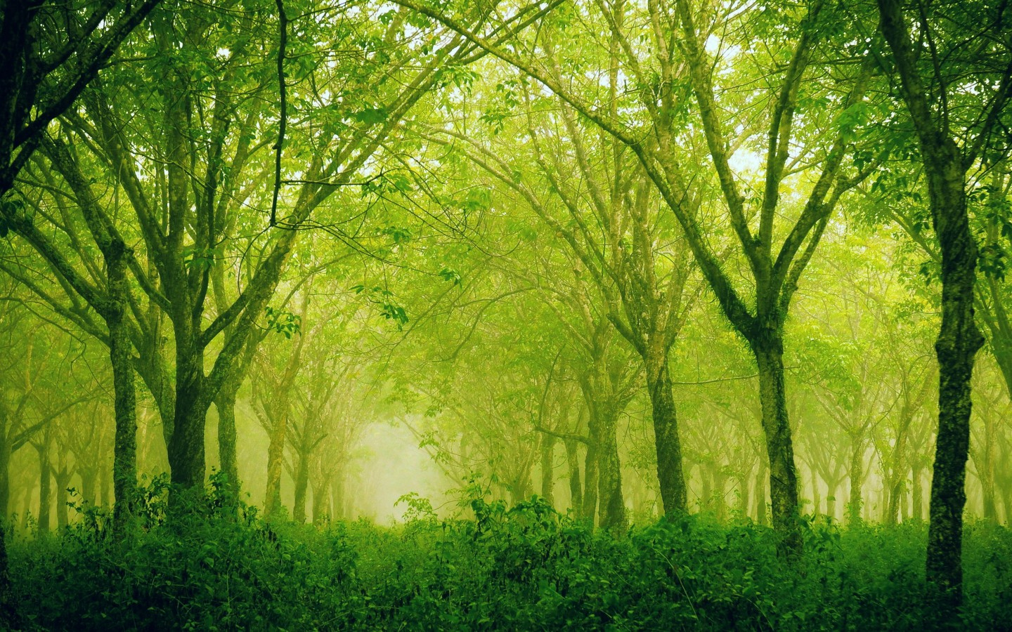 Hd wallpaper sublime silence forest for 2880 x 1800 retina display 1440x900