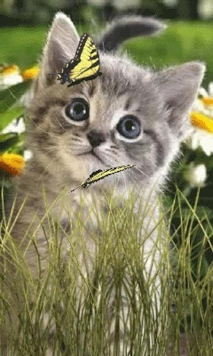 Download Butterfly Kitty Live Wallpaper for Android by Aniwidgets 307x512