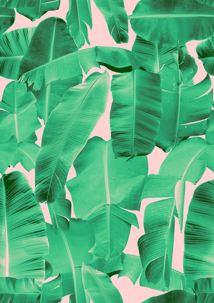Banana Leaf Wallpaper Banana Leaf Print by Rihanna 736x1040