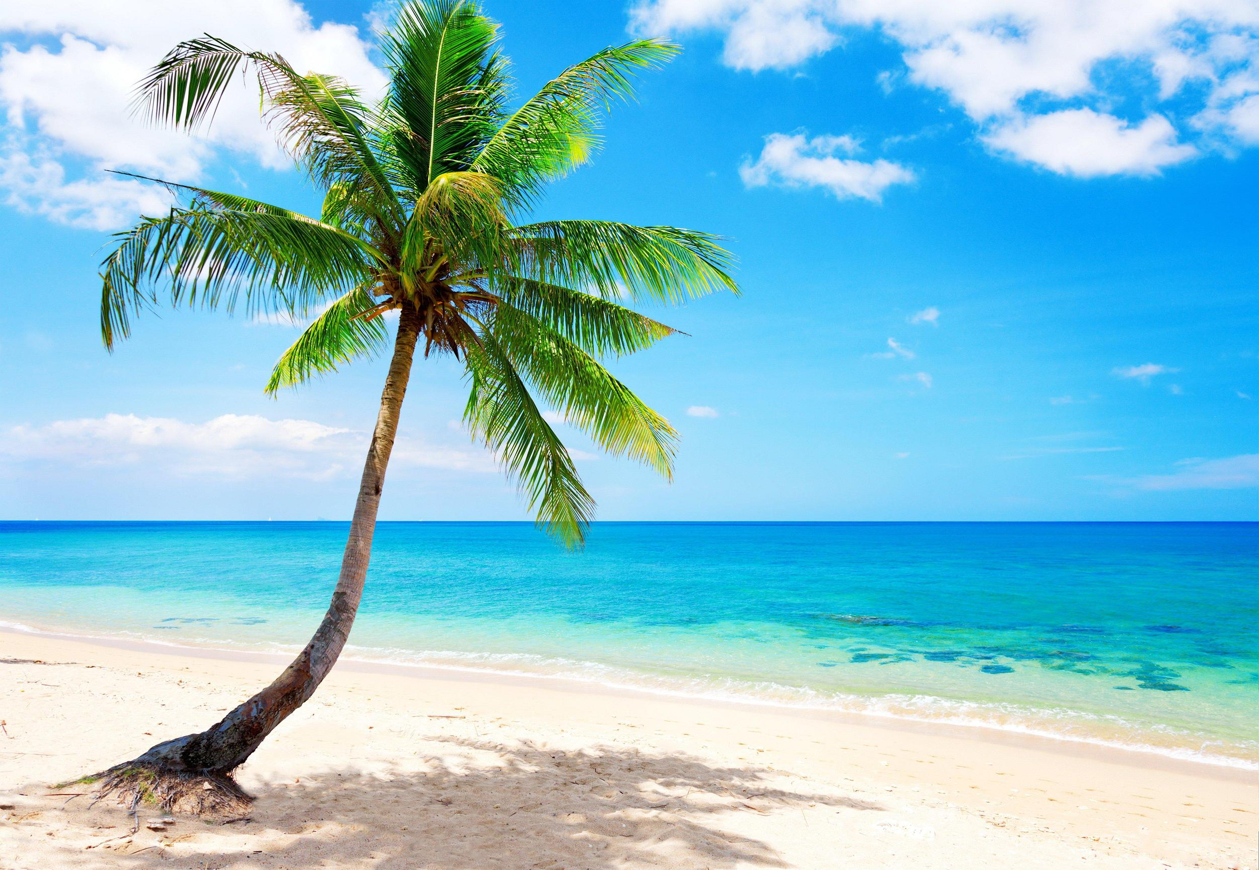 берег камни пальмы shore stones palm trees  № 792068 бесплатно
