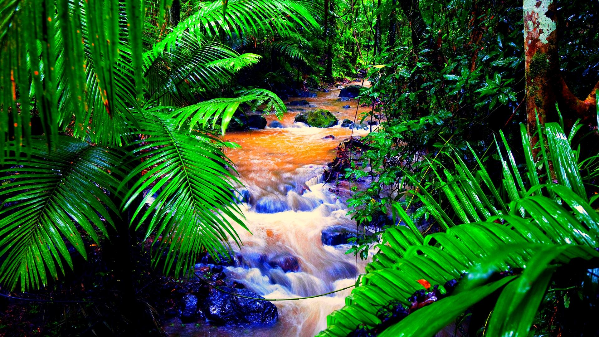 rainforest wallpaper wallpapersafari