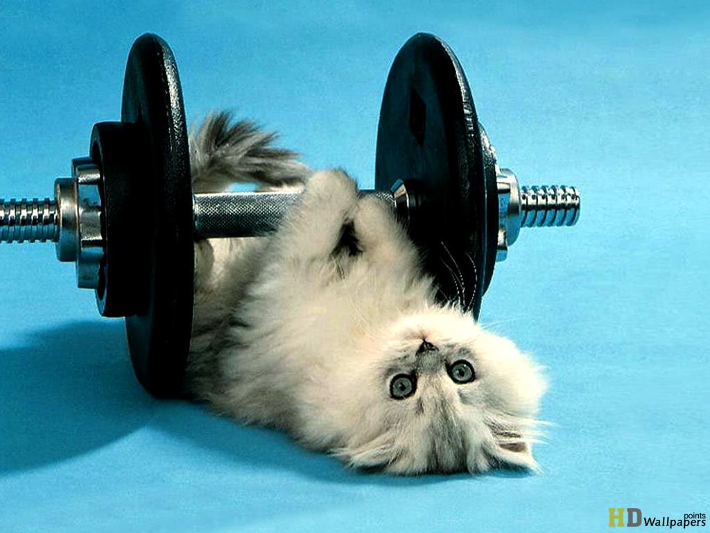 Cute Funny Cat Mobile Desktop Wallpaper 1024x768