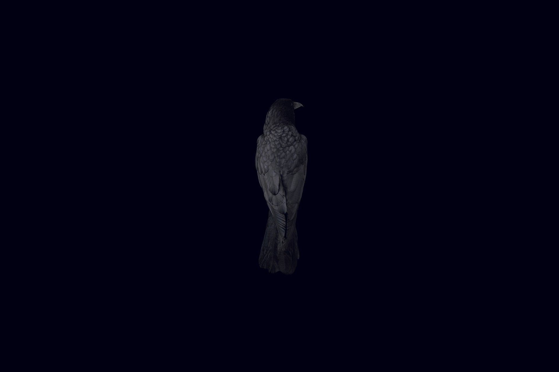 Wallpaper black background bird raven wallpapers minimalism 1920x1280