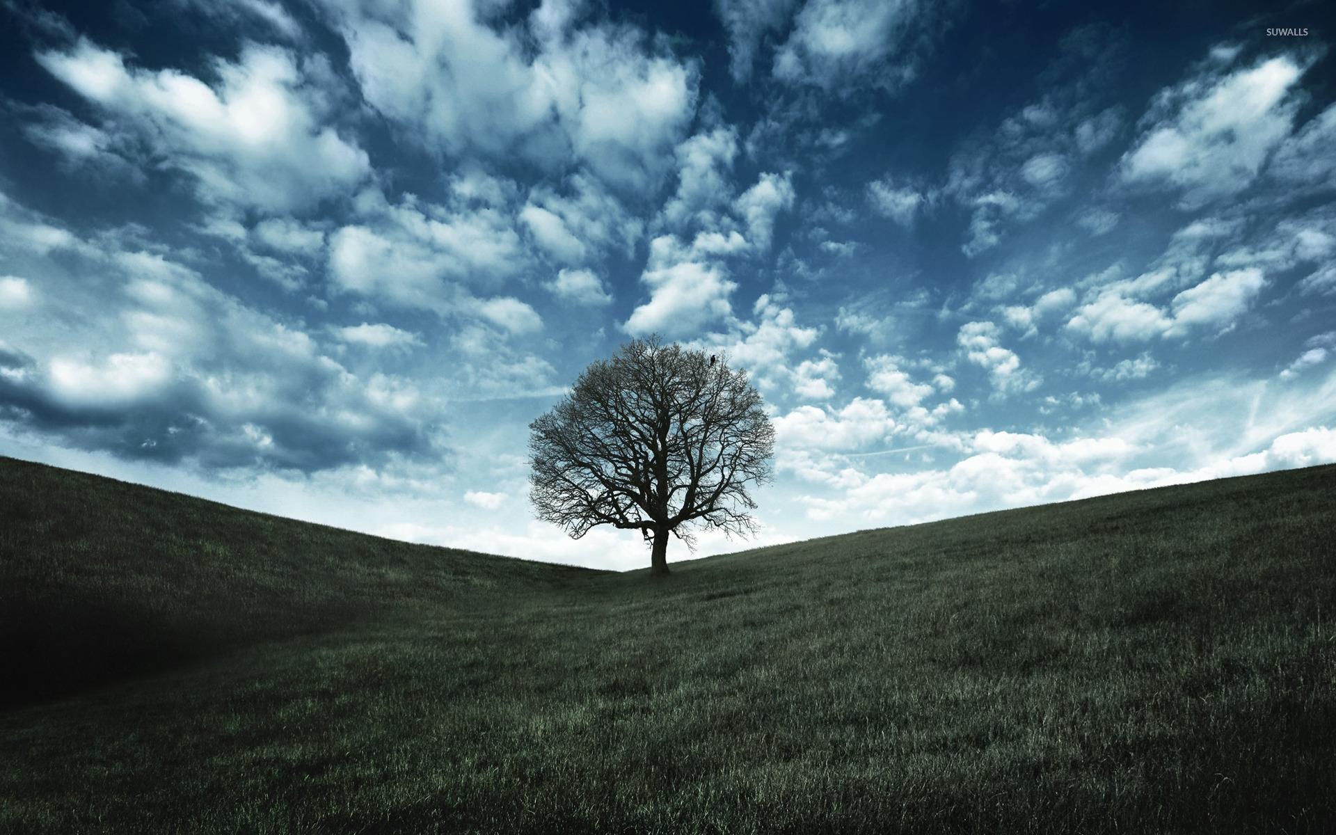 lonely tree wallpaper Wallpaper Wide HD