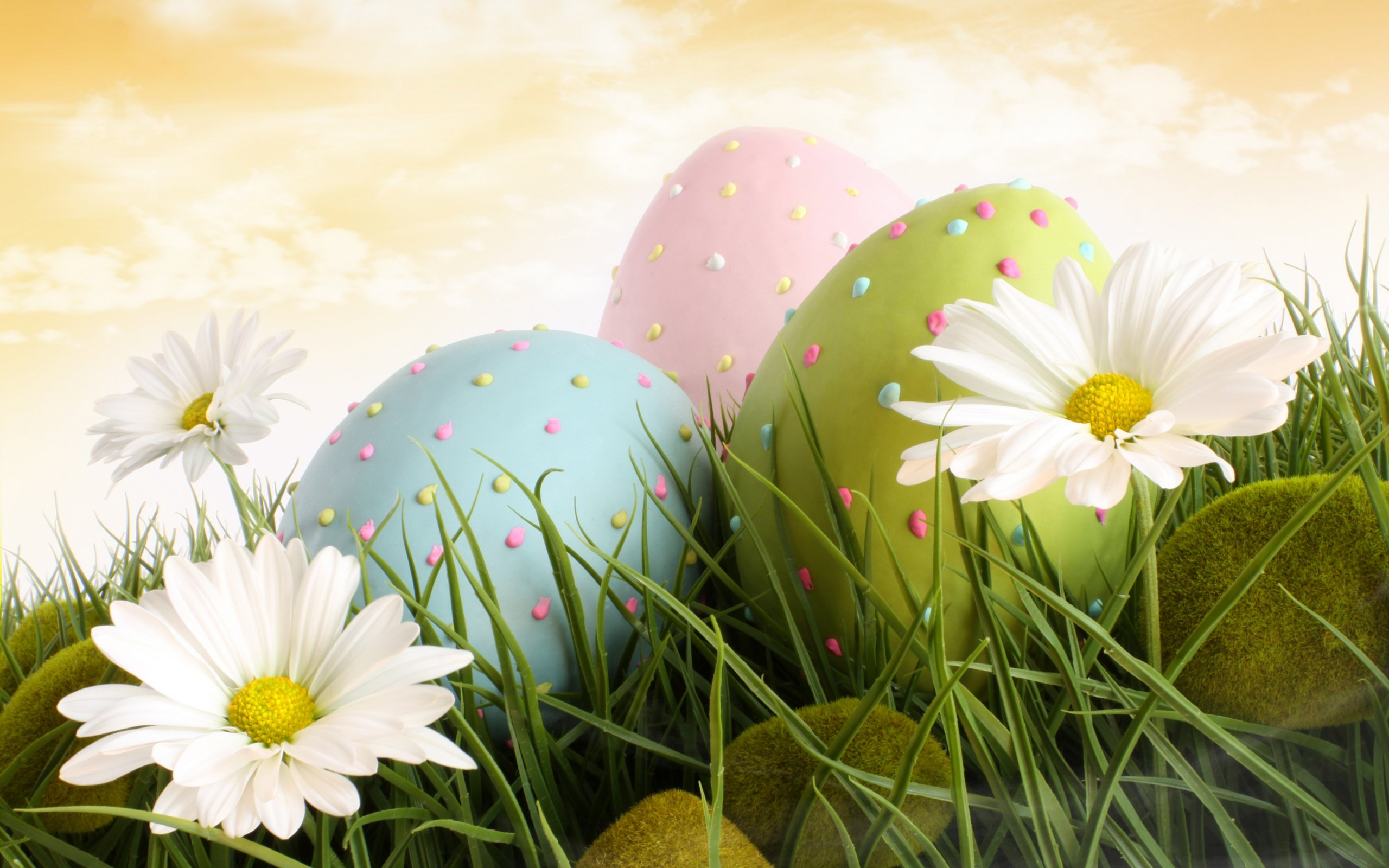 HD Bunnies And Easter Wallpapers Desktop Backgrounds Funmole 2560x1600