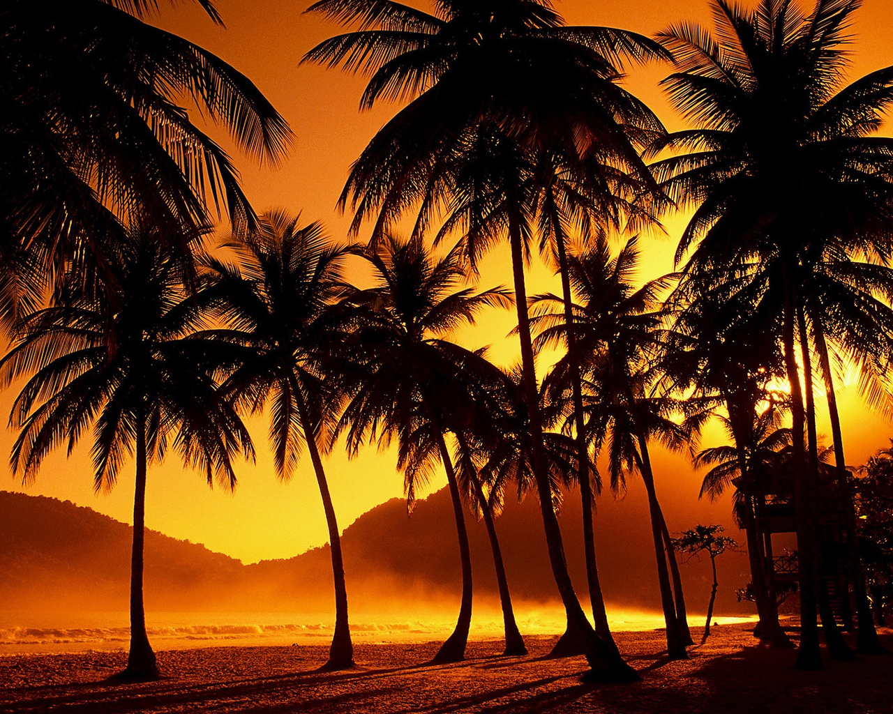 Wallpaper sunset tropical palm trees night nature large 1280x1024 1280x1024