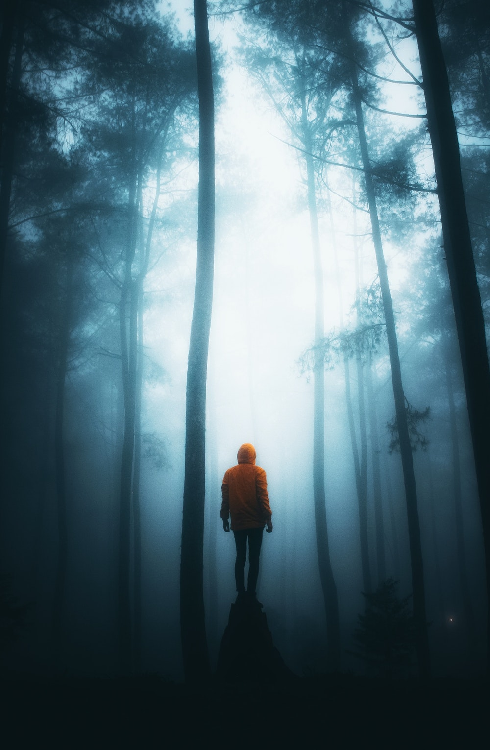 32 The Forest Wallpapers On Wallpapersafari