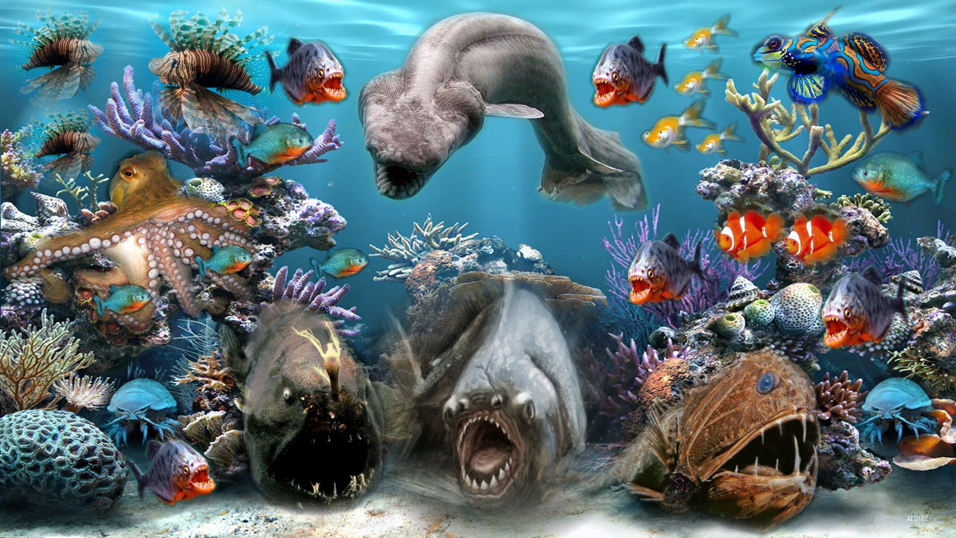 Awesome Ocean Sea Animals Collection Wallpaper 1920x1080