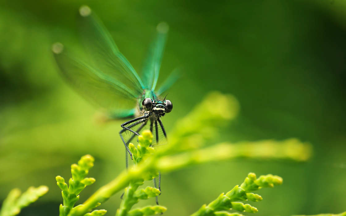 Download mobile wallpaper Insects Dragonflies 26368 1120x700