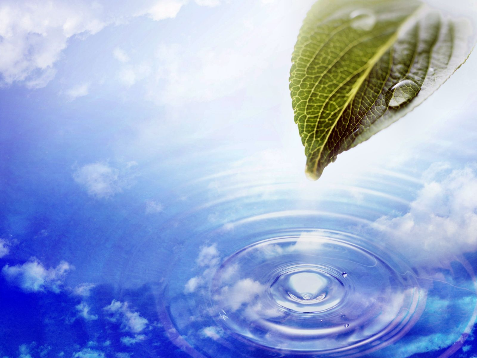 Animated wallpaper windows 7 See To World 1600x1200