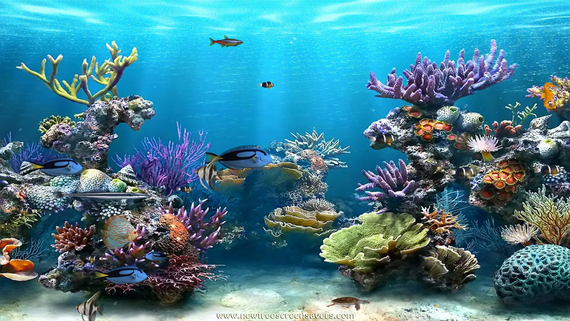 Скачать на рабочий стол обои аквариум