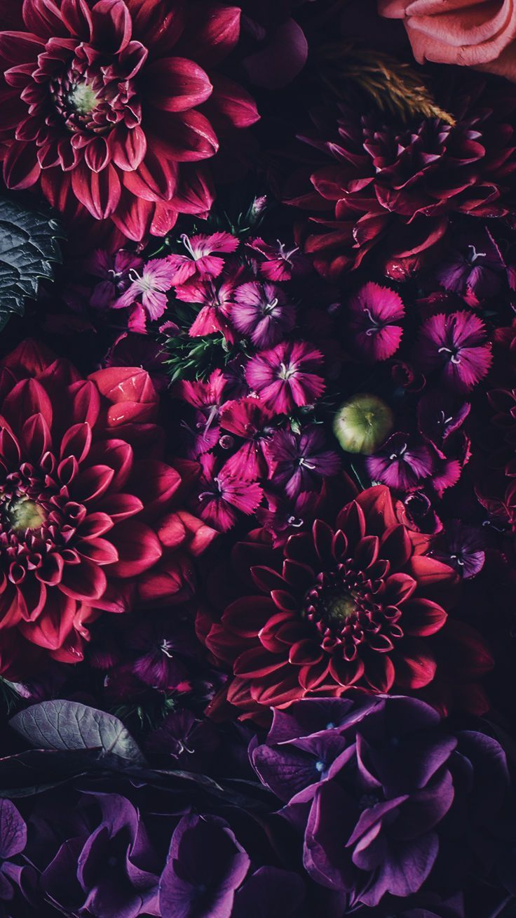 5 Floral iPhone Wallpapers To Celebrate 65k Pinterest Followers 736x1308
