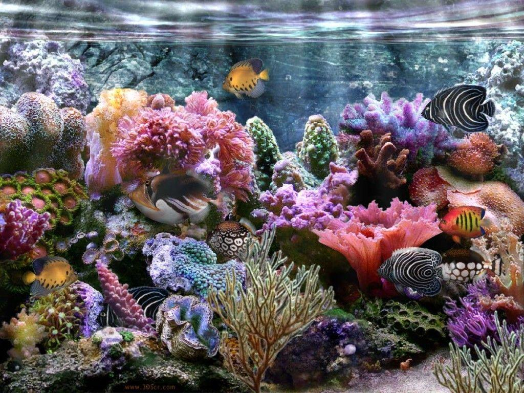 Coral Reef Wallpapers 1024x768