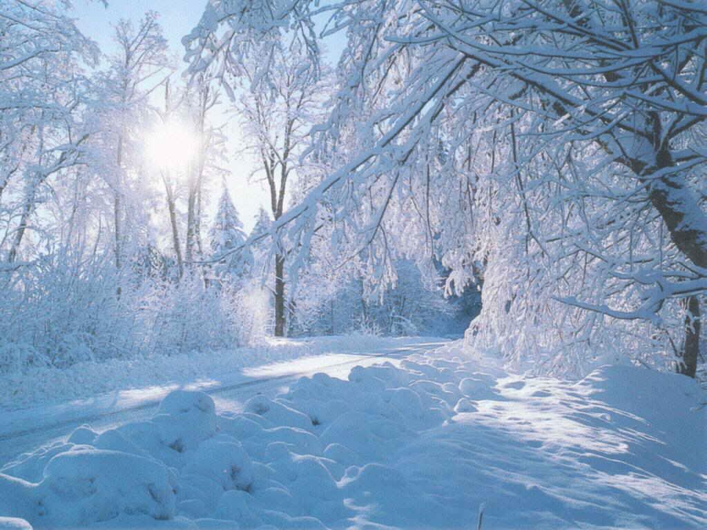 beautiful nature winter wallpaper Wallpaper Express is 1024x768
