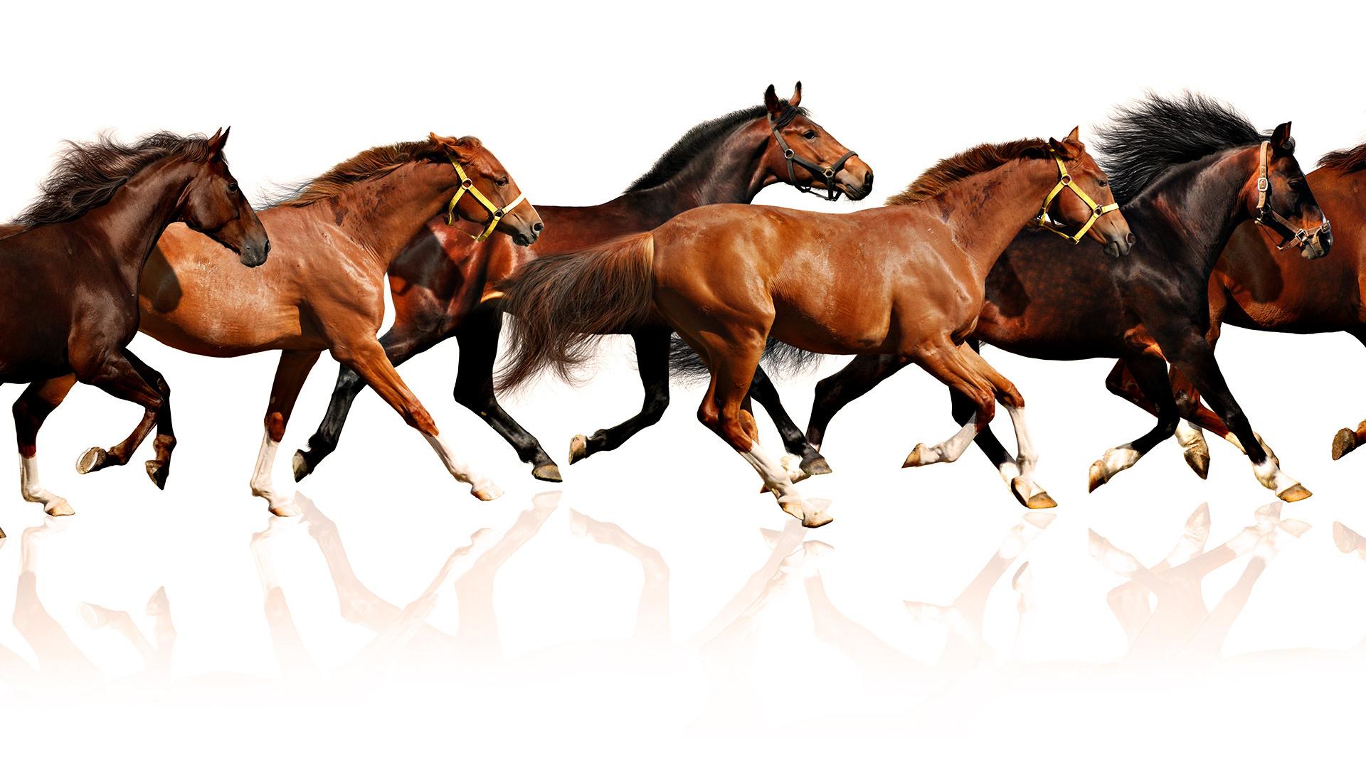 Seven White Running Horses Wallpaper