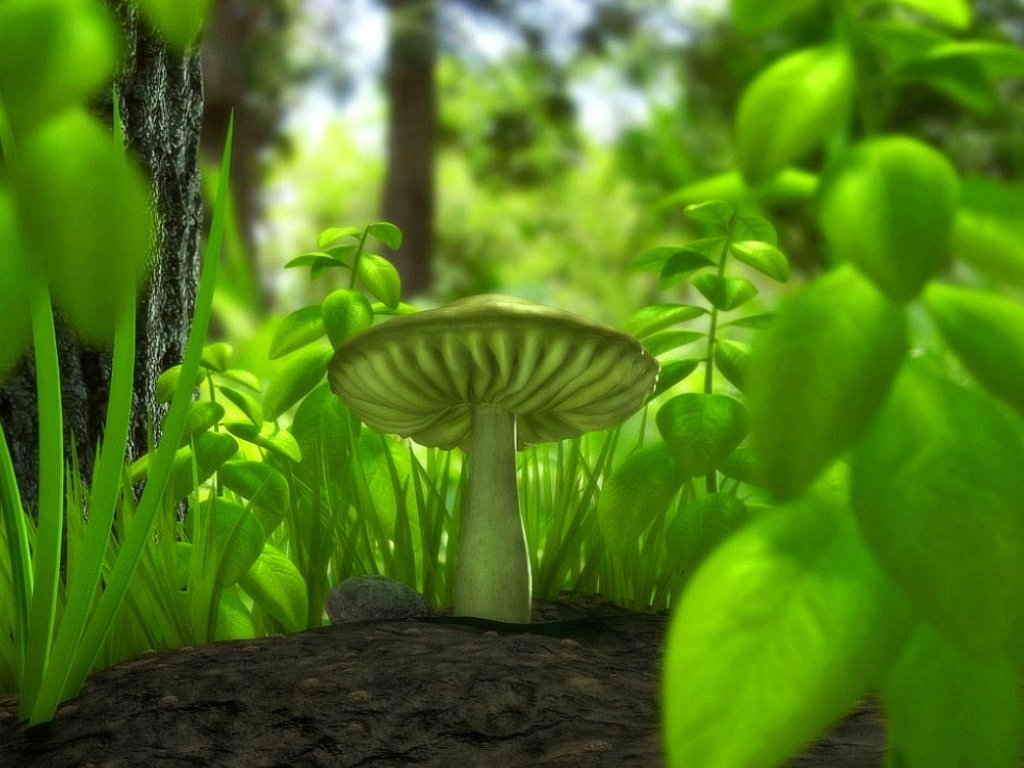 WnP Wallpapers Pictures Green Mushroom Wallpaper 1024x768