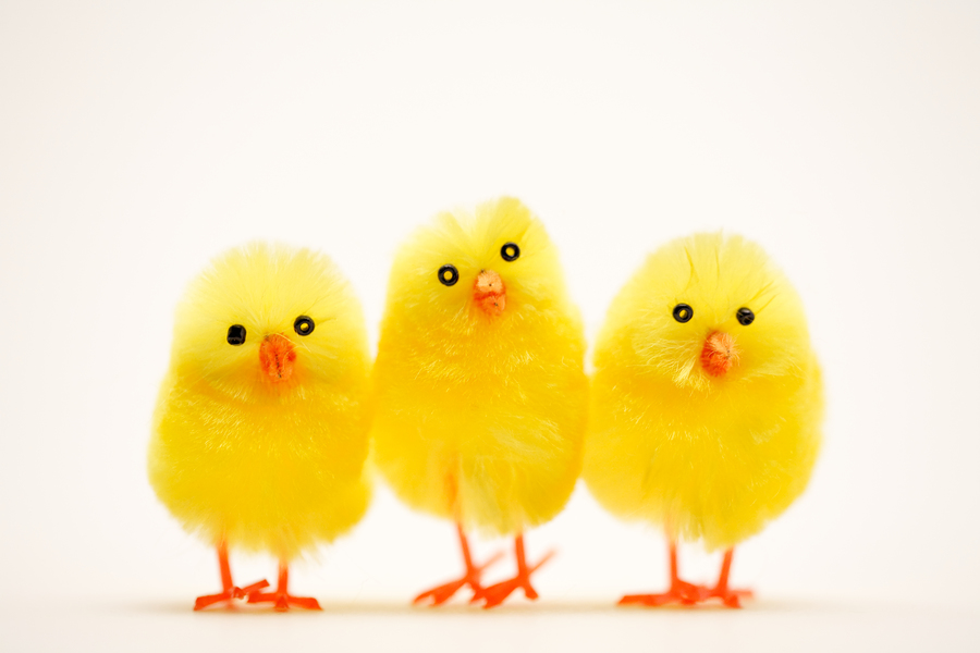 Image result for easter chicks