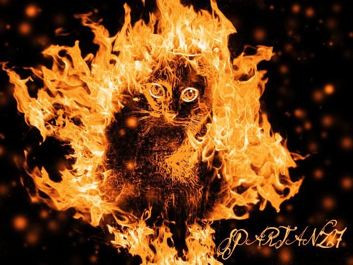Firecat Picture Fantasy Cat 720x540