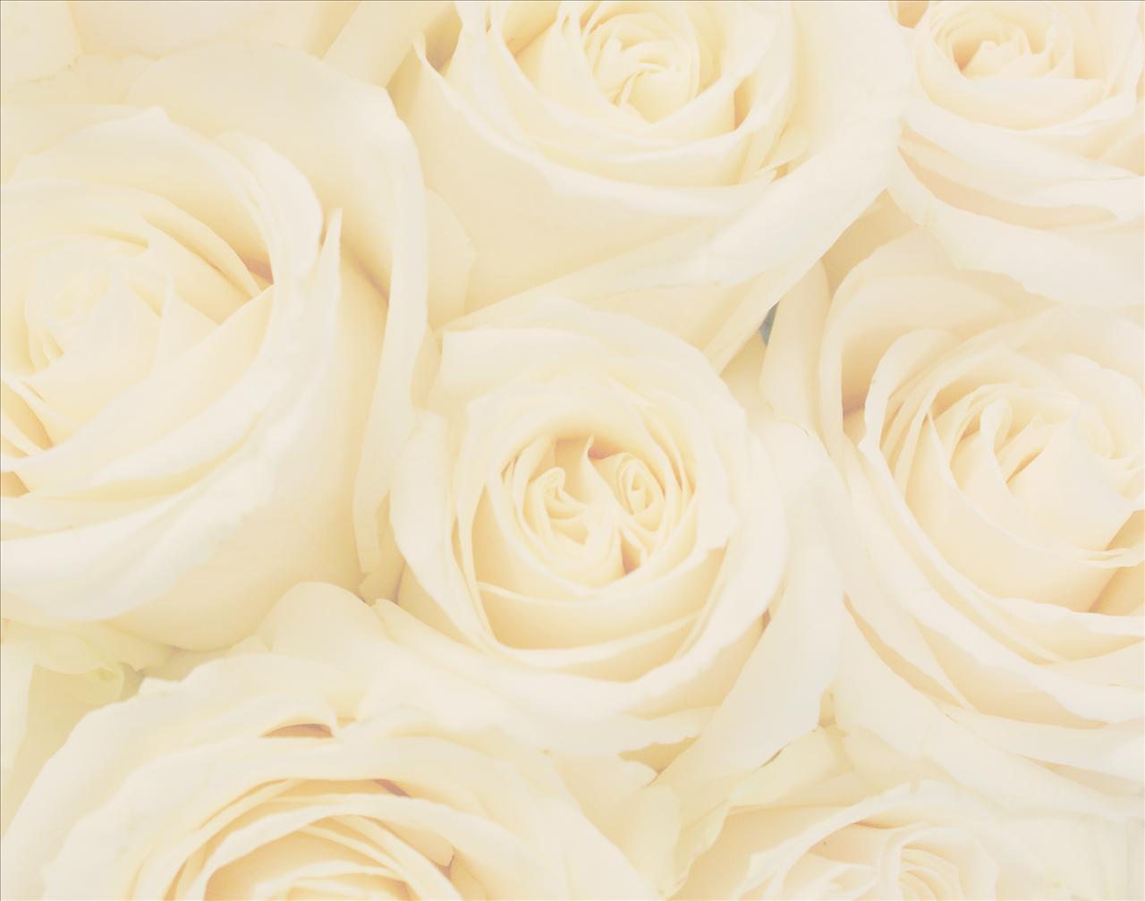 Wedding Denallta Wedding Background 1280x1007