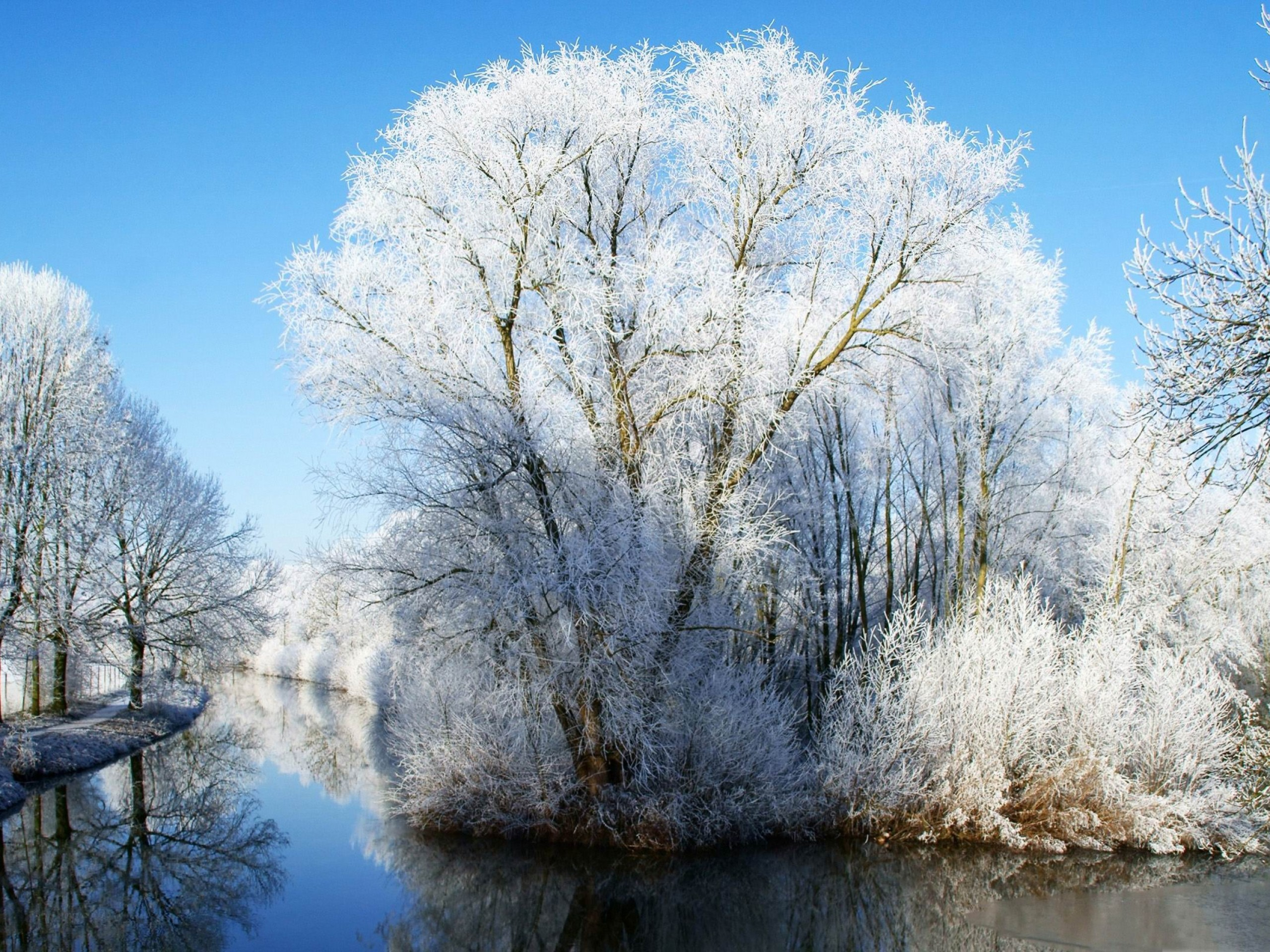 Winter Snow HD Wallpaper Nature Wallpapers 2560x1920